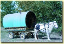 Irish Cob Horse and Gypsy Wagon